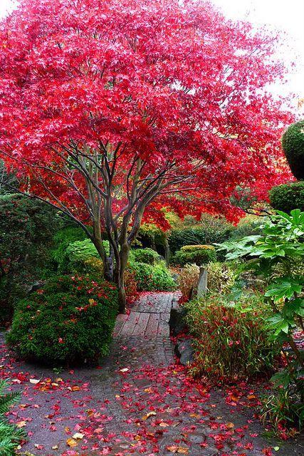 The Japanese Garden Calderstones Park | Beautiful gardens, Dream garden, Japanese garden