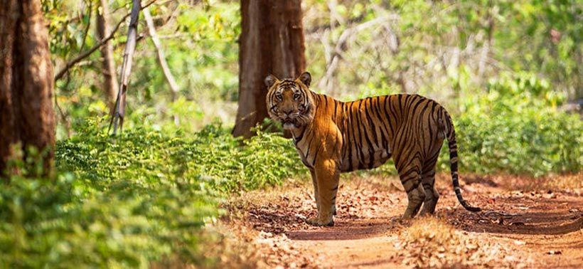 Wildlife Tour In Odisha For Tourist Those Love Wild Animals Animals Wild Wildlife Tour Animals