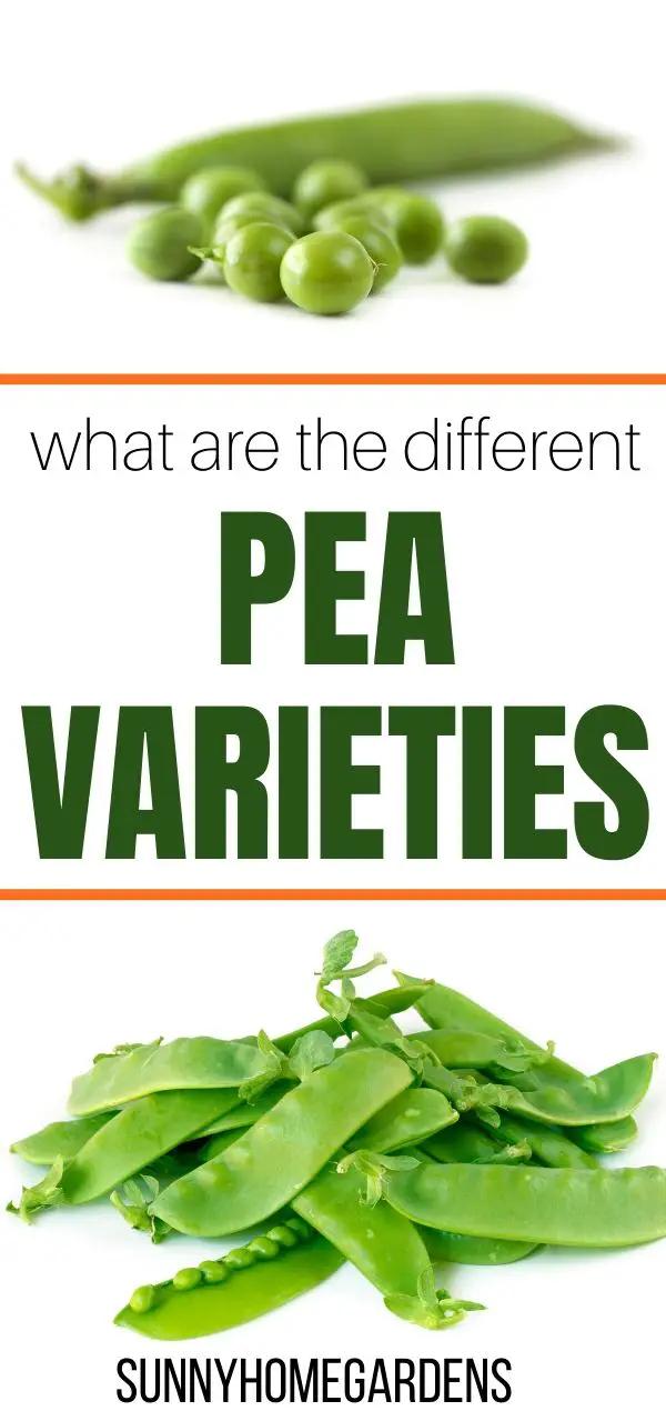 Varieties And Types Of Peas In 2020 Backyard Vegetable Gardens
