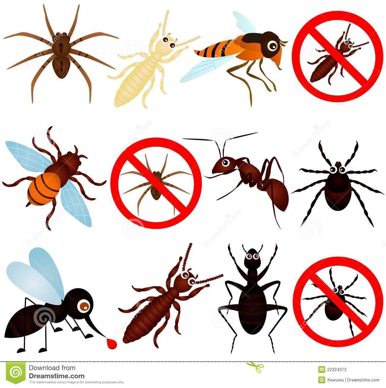 مكافحة الحشرات تحتاج إلى مهارة وحرفية للتخلص من الحشرات نهائيا ولأن العميل يستحق أن يحصل على خدمة ممتازة لابد أن يجيب أولا ع Pest Control Pests Bees And Wasps