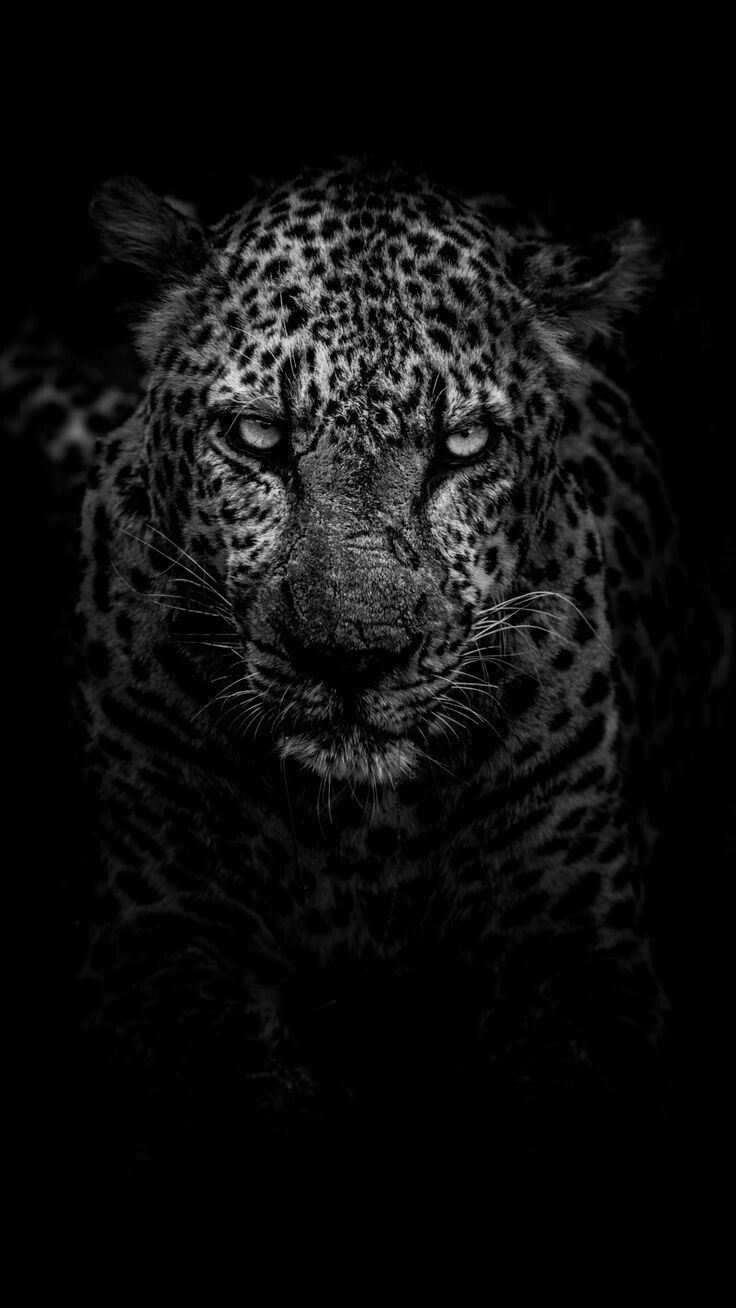 Leopard Kissenbezug Kissenhülle Outdoor Indoor fell katze wildkatze leo raubtier