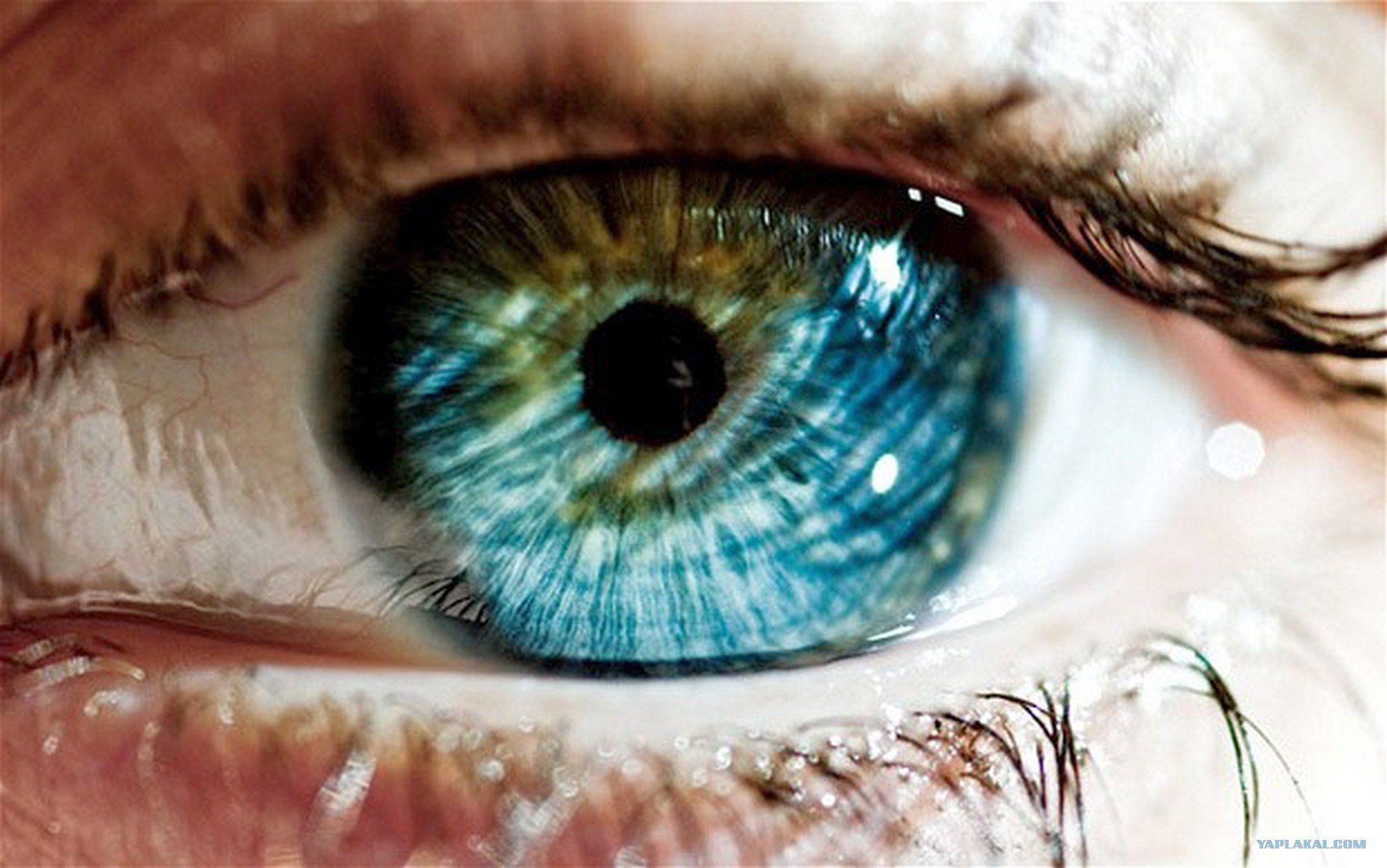 Science your eye color reveals a lot about you the mind eye nvjuhfo Gallery