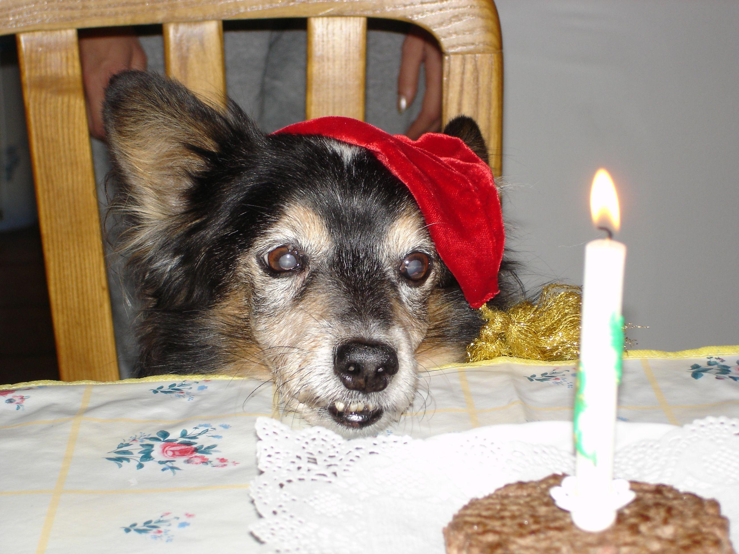 il suo 15 compleanno