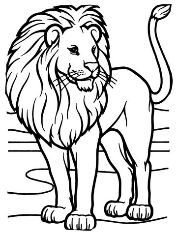 Male African Lion coloring page from Lions category