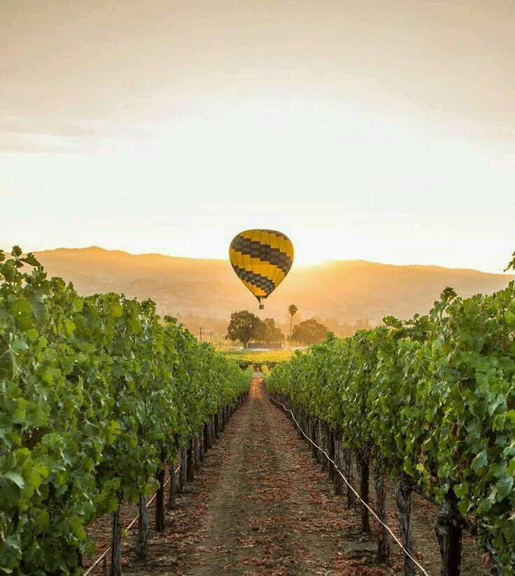 Pin by Flowers In Heart on Air Ballon Wine country