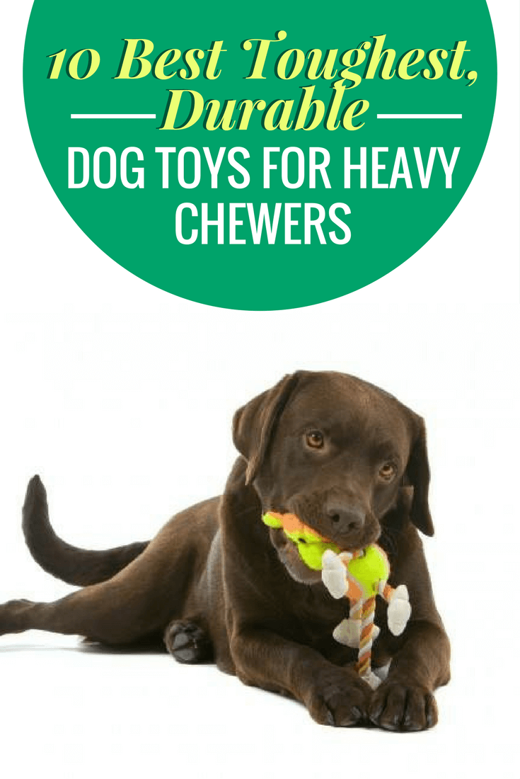 10 Best Toughest, Durable Dog Toys For Heavy Chewers | Toy, Dog and ... | Best Dog Toys For Heavy Chewers