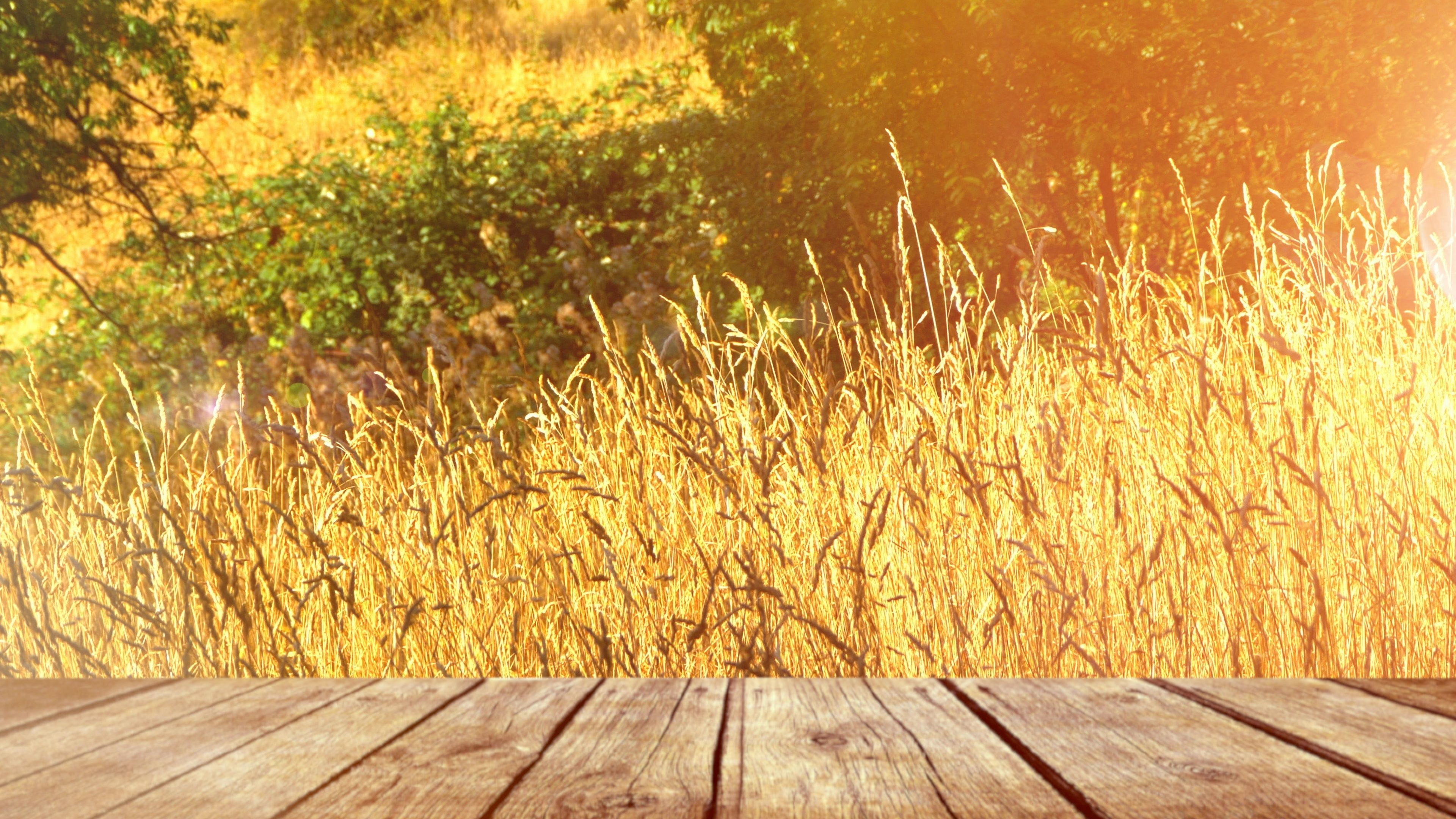 Yellow Field Grass Meadow Nature Field Background Park Landscape Stock Footage Ad Meadow Nature Grass Yellow Yellow Fields Park Landscape Wattpad Background