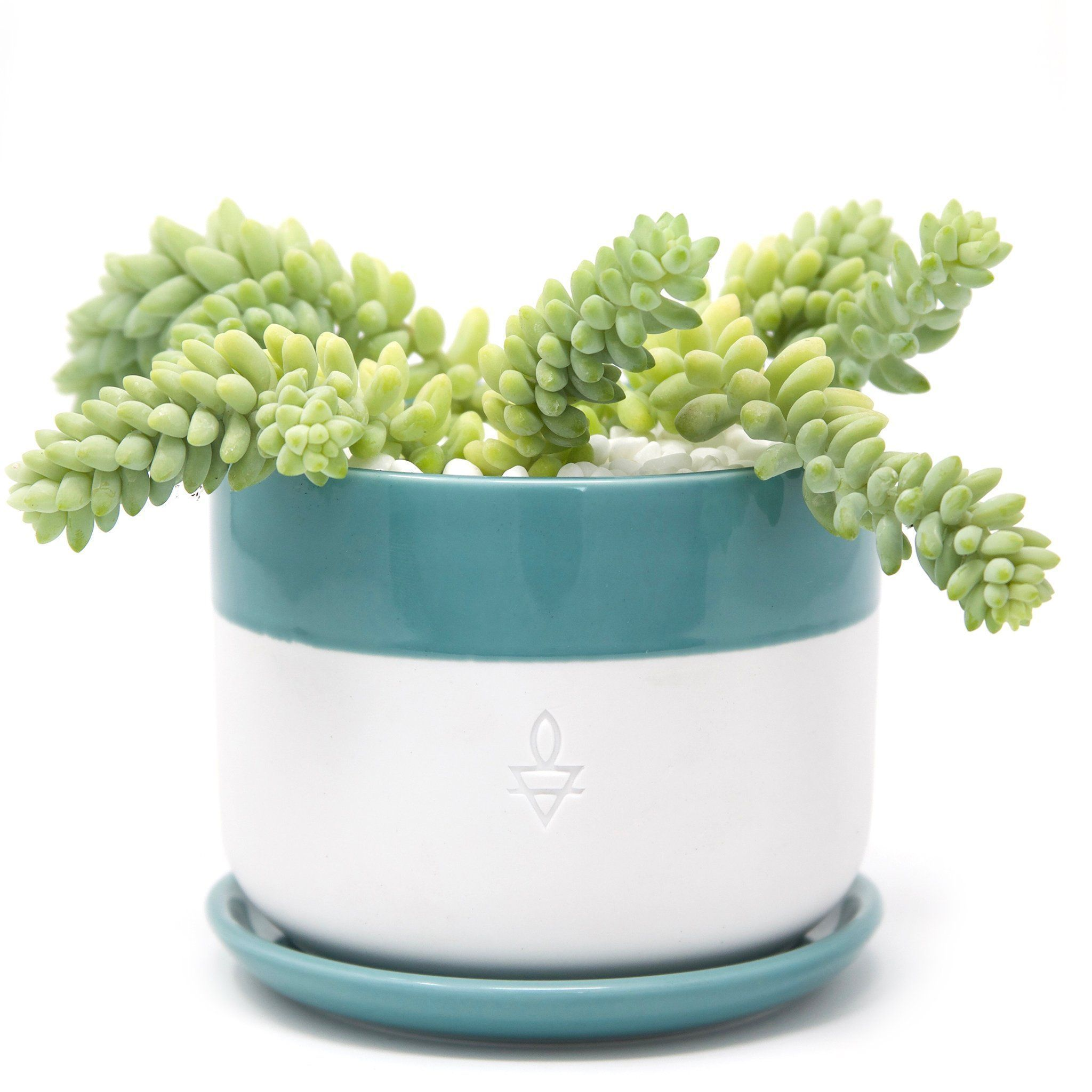 These Are The Best Places To Plants Online Refinery29 Https Www
