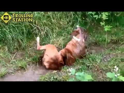 Indian Funny Videos Compilation 2017