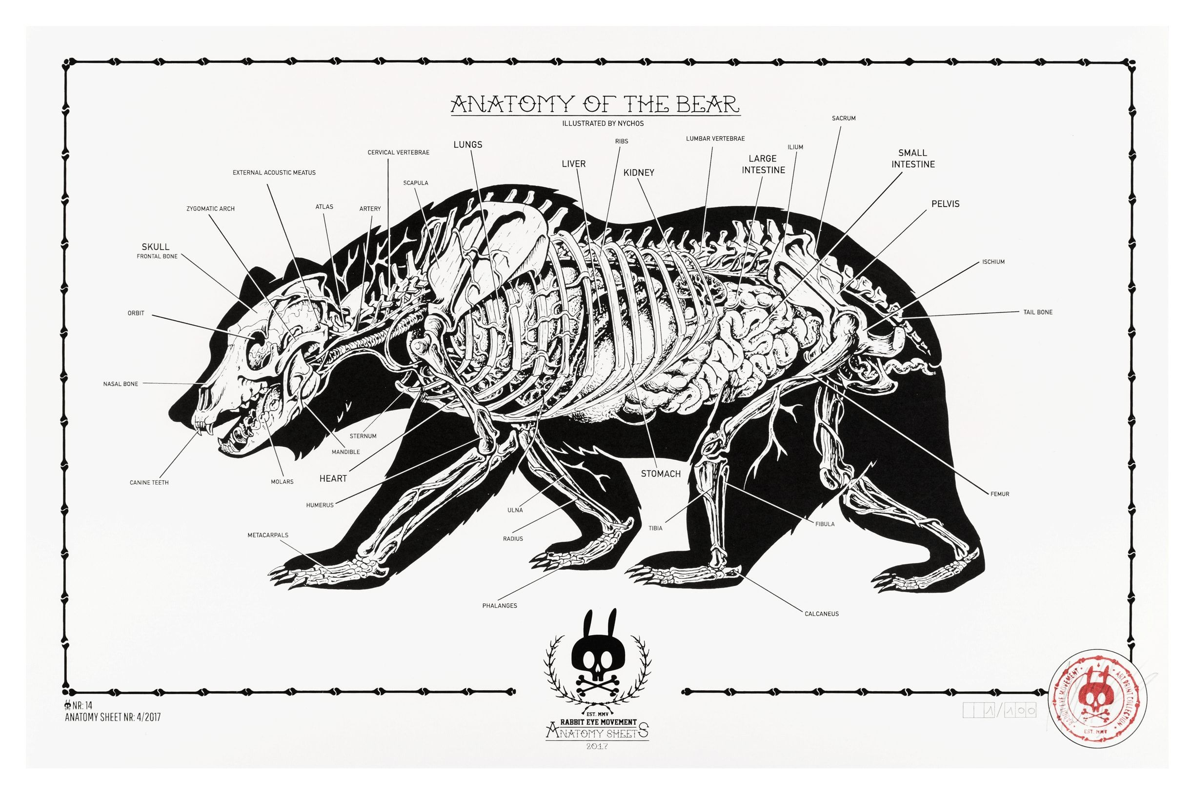 Image Result For Bear Anatomy