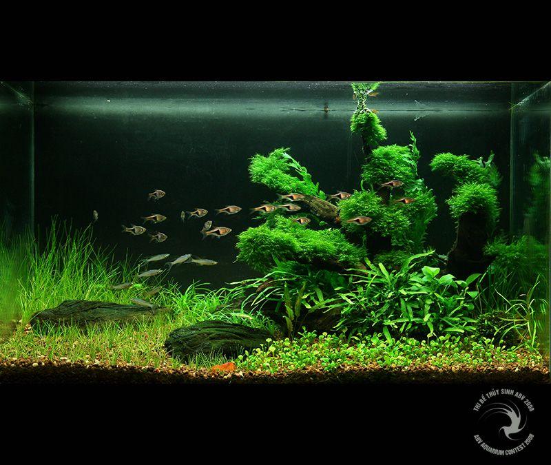 Aquarium Blog: Coletanea de Layouts para Aquarios Plantados