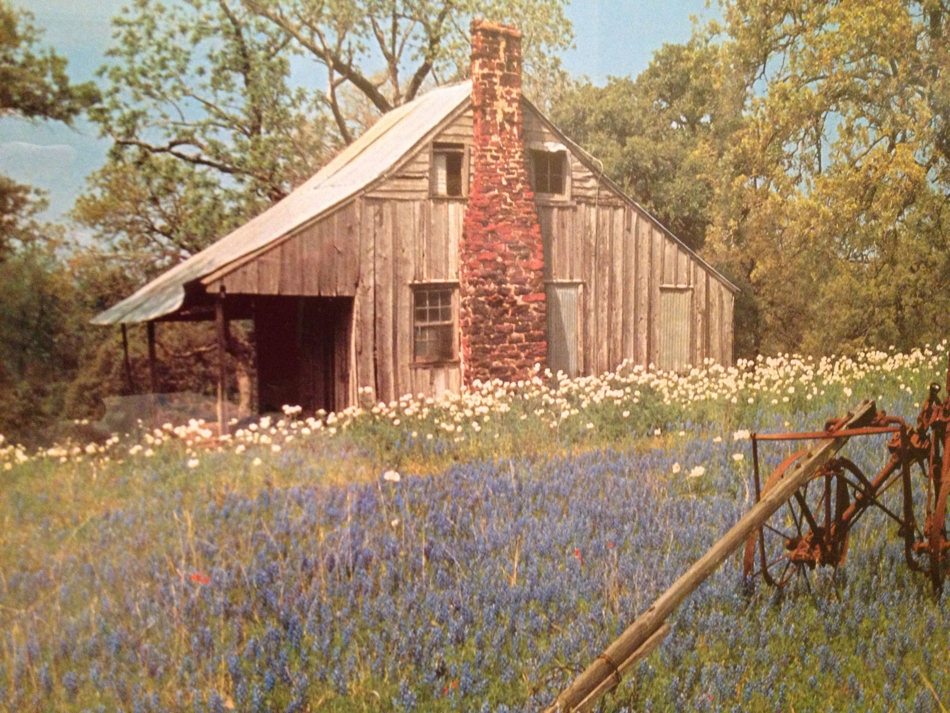 Old texas home with bluebonnets other wild flowers for Texas cabin builders