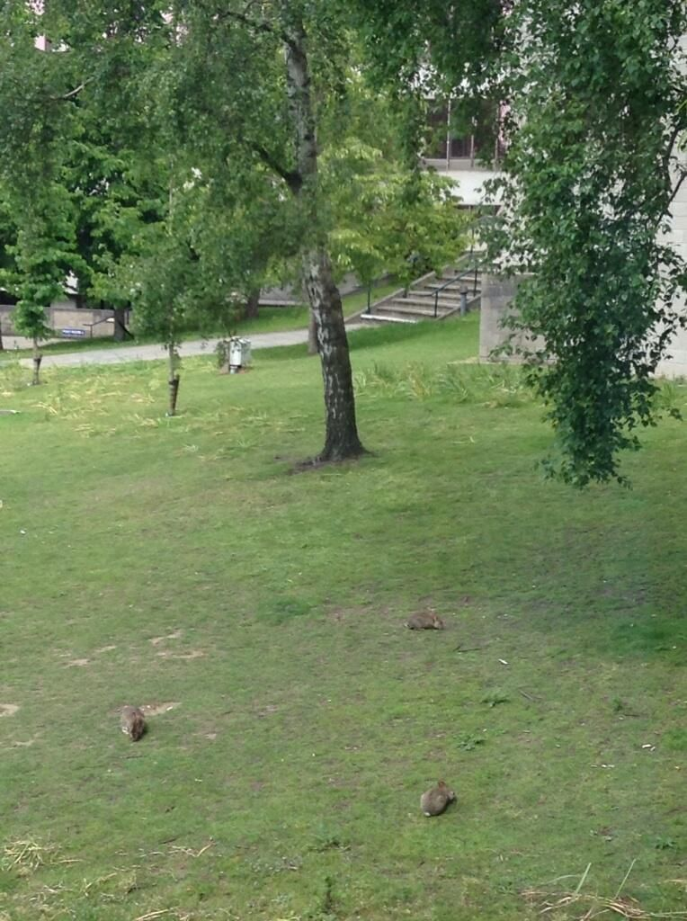 Bunnies outside the office window