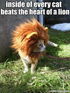 A little bit of lion