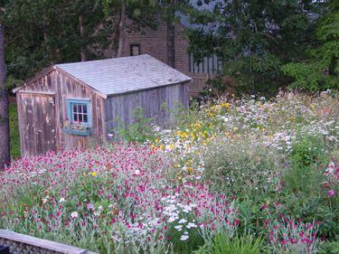 Wildflower Garden Like Pickity Place! My Dream!