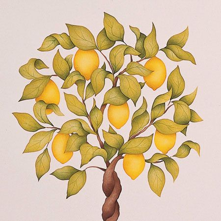Citrus Topiary Tree Stencil Set | Topiary trees, Mural art and Topiary