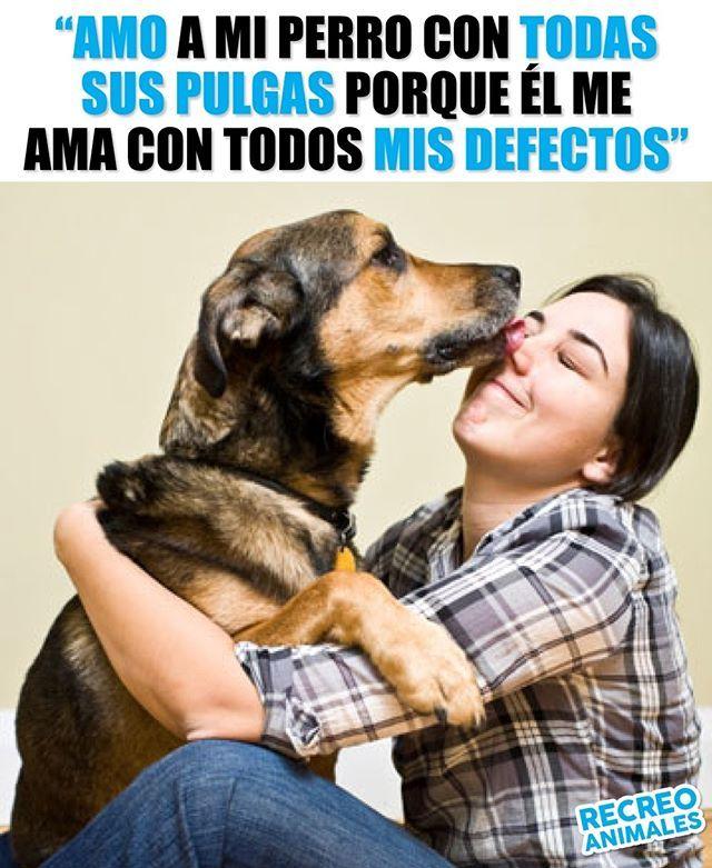 Y No Me Pone Peros Dog Kiss Love Amor Perro Perros Frases Animales Frases Perros Mascotas