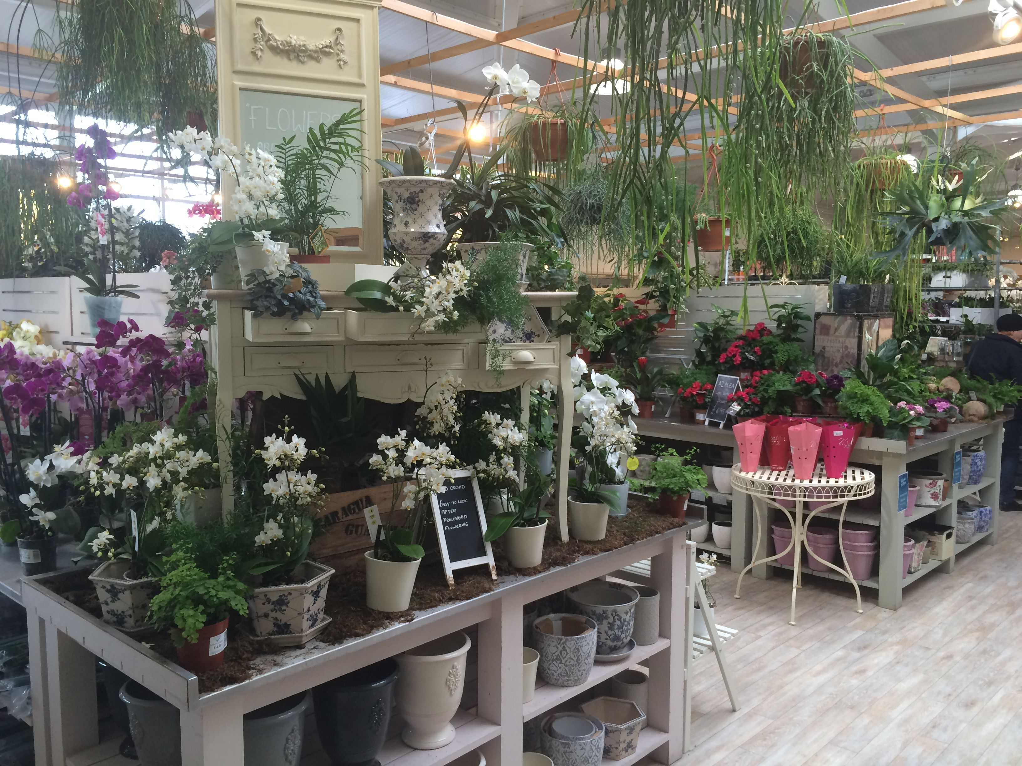 House Plant Display At Redfields Garden Centre Part Of The Blue Diamond Group November 2016 Garden Center Garden Center Displays Plants