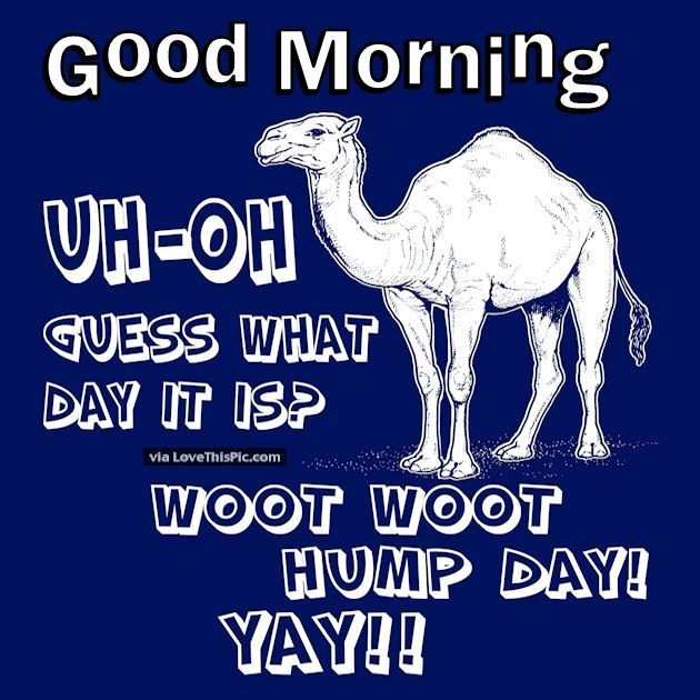 Good Morning Uh Oh Guess What Day It Is Hump Day good ...