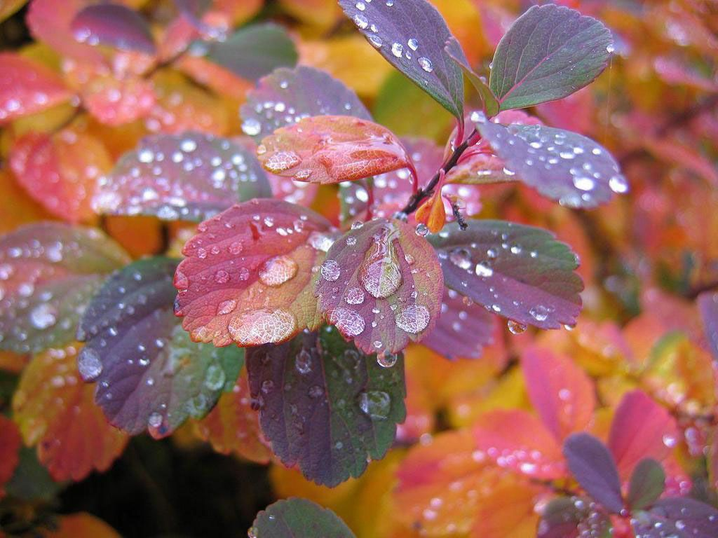 Rain Drops On Colorful Leaves Wallpaper