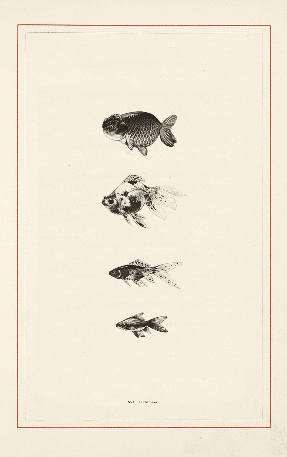 Pin von Evgeniya auf Fish | Pinterest | Mondfisch