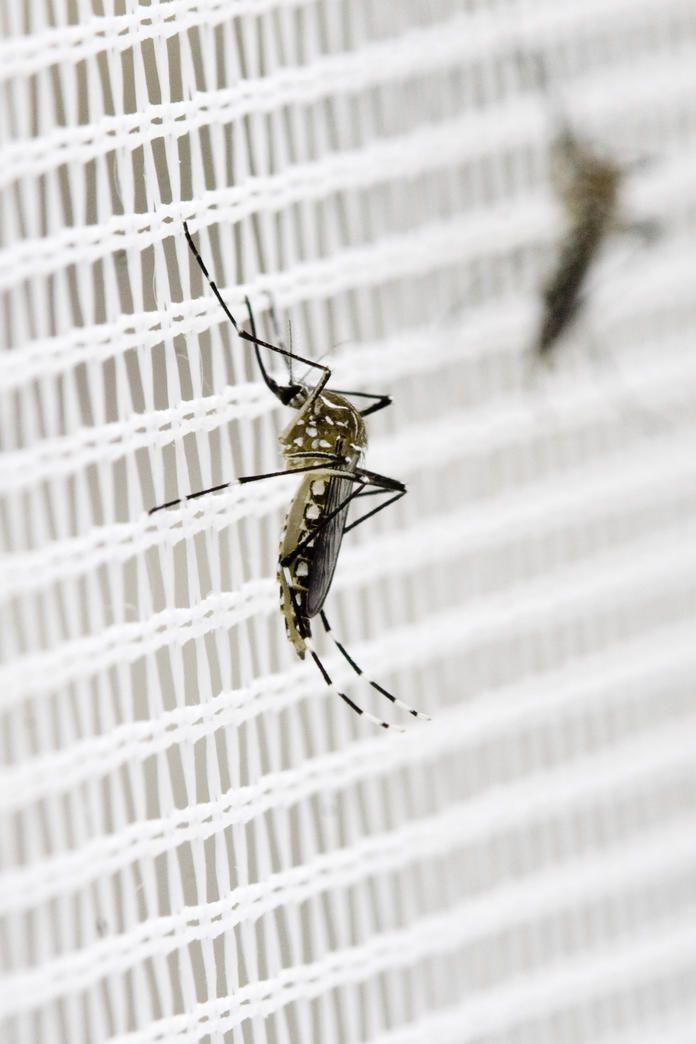 Stechmücken Bekämpfen