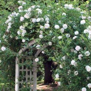 pergolado com treliça para jardim vertical