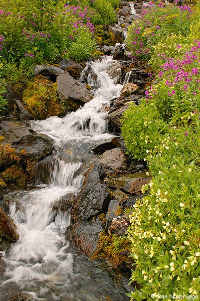 #Wildflowers, Kenai Fjords National Park     -   http://vacationtravelogue.com  Guaranteed Best price and availability  on Hotels