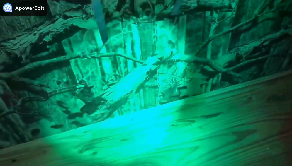 Zoomable Green //Red// UV Hunting Flashlight Light Night Vision Flashlight Hog Pig