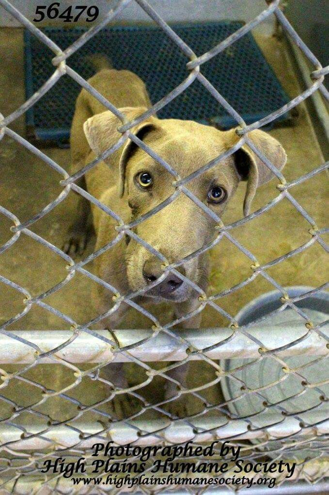 Clovis Nm Shelter Animals Need Homes Https M Facebook Com Hphsnm Animal Shelter Shelter Good Cause