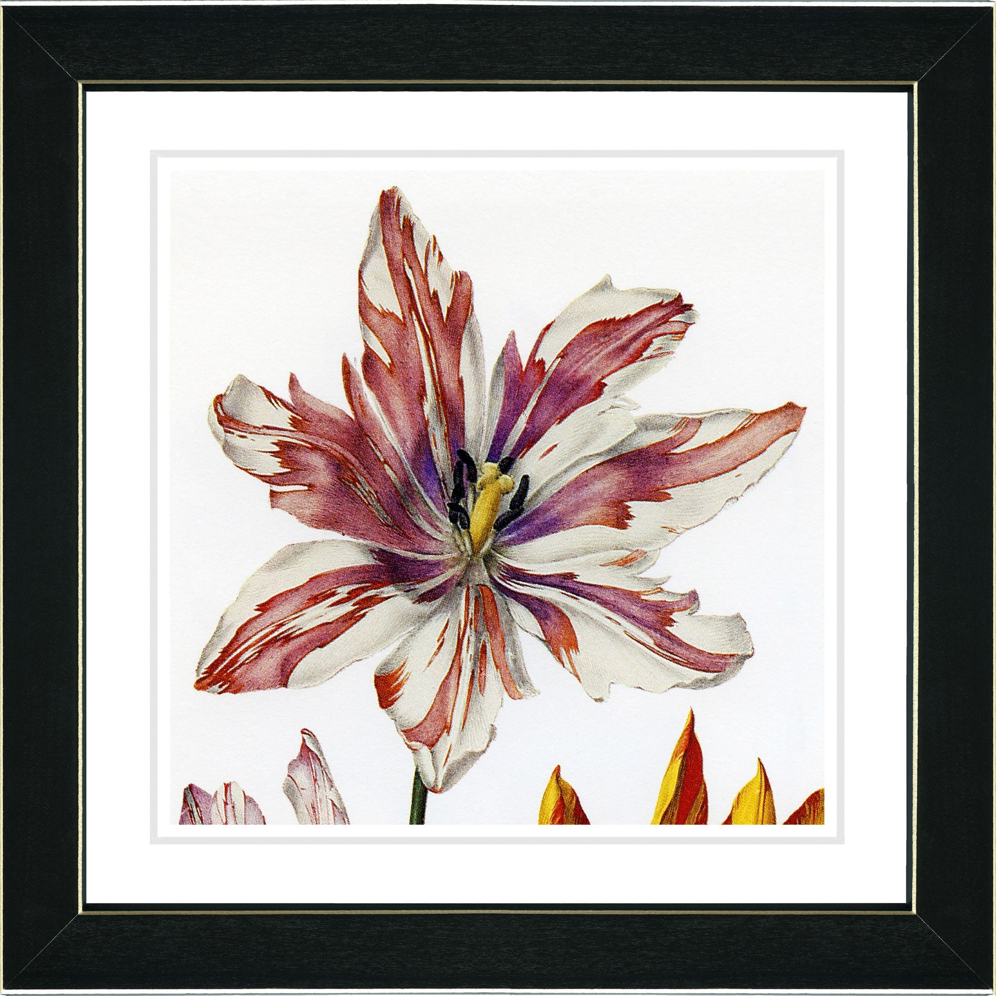 Vintage Botanical No. 24W by Zhee Singer Framed Giclee Print Fine Wall Art