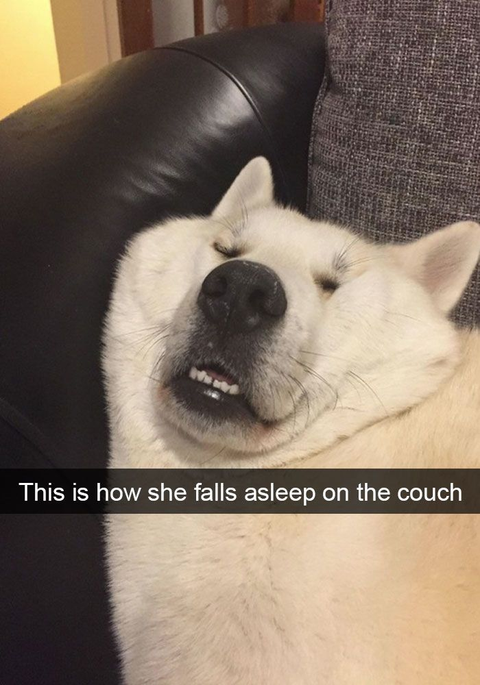 90 Hilarious Dog Snapchats That Are Impawsible Not To Laugh At