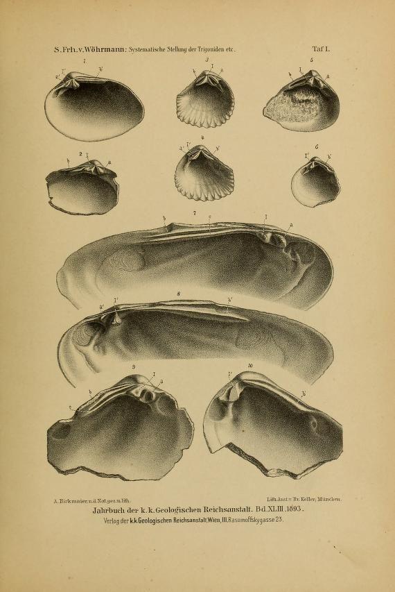 Ueber die systematische Stellung der Trigoniden und die Abstammung der Nayaden / - Biodiversity Heritage Library