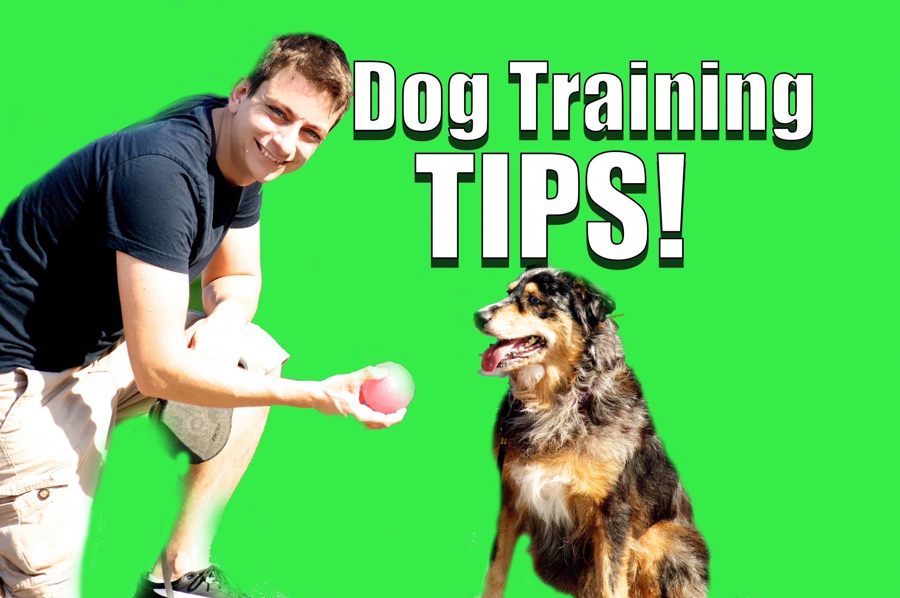 Reliable Supplied Dog Training For Obedience Pin This