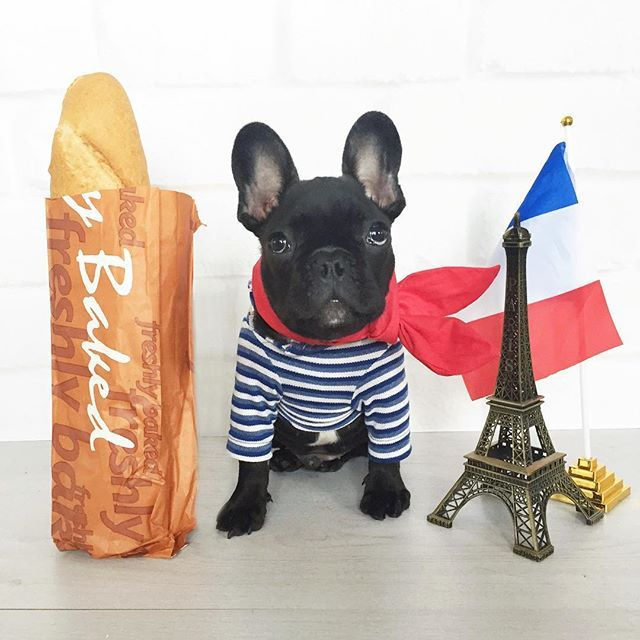 Happy Bastille Day To All My Fellow Frenchies Out There Cc
