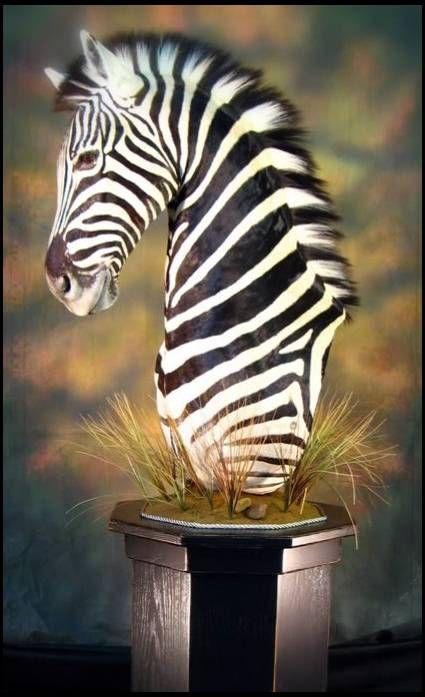 Zebra O Cebra Yahoo zebra pedestal mount -...