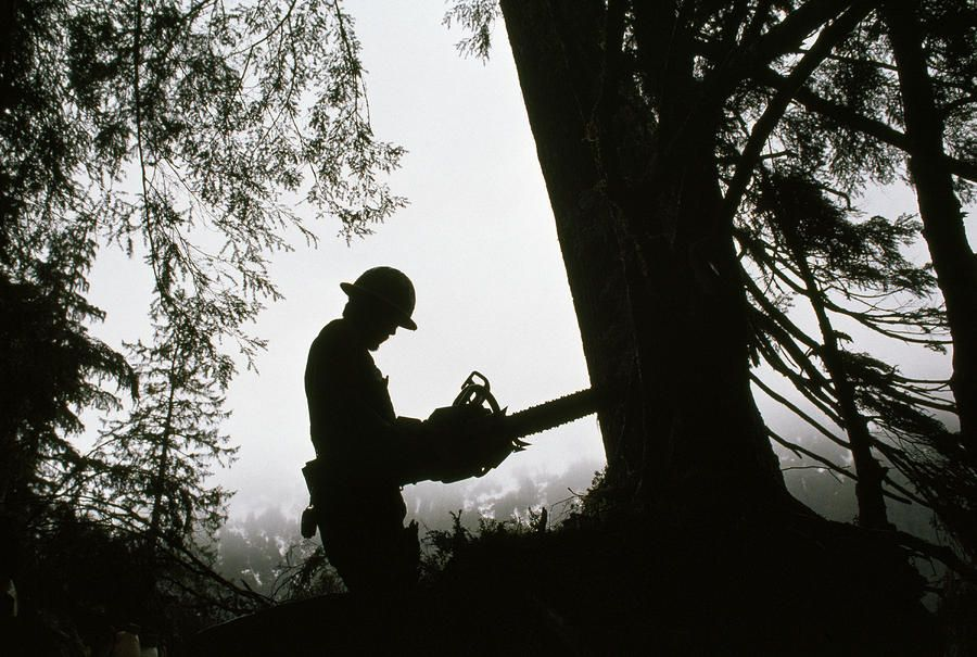 My Lover Was A Logger : So god made a logger for my love pinterest logs