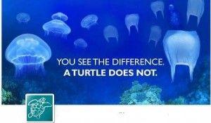 turtlesss