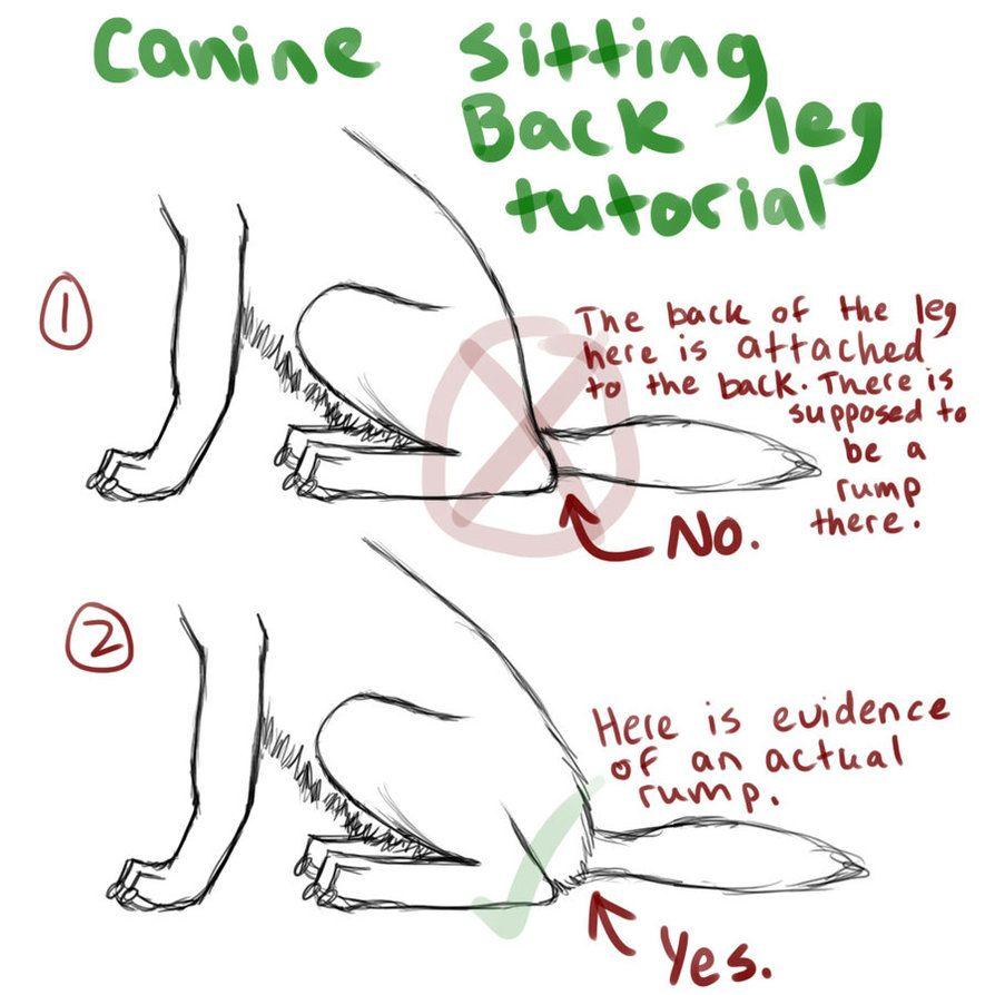 Canine Back Leg Tutorial_Sitting Down by FelonDog | Drawing ...