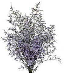 Caspia Limonium Flowers Types Of Flowers Winter Plants