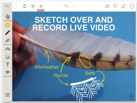 Here Is An Excellent Interactive Whiteboard App Free Today