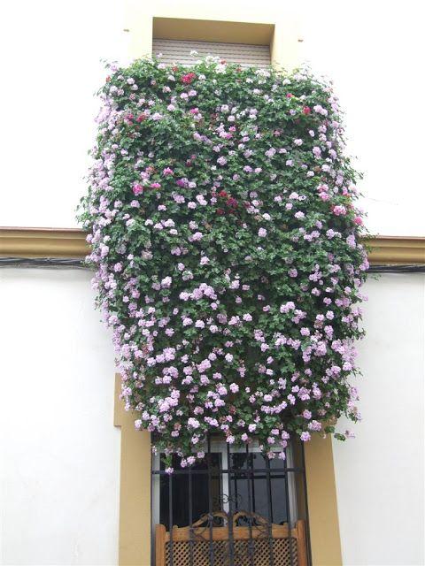 Córdoba, calle Diego Méndez.