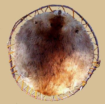 901e7a253d709 BEAVER PELT STRETCHED FOR DRYING ON A WILLOW HOOP | THE ROCKY ...
