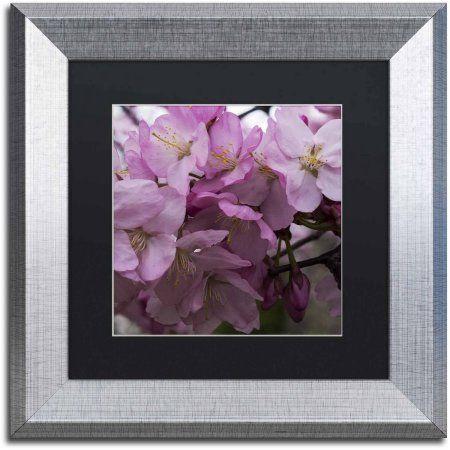 Trademark Fine Art Cherry Blossom Cluster Canvas Art by Kurt Shaffer, Black Matte, Silver Frame, Size: 11 x 11, Pink
