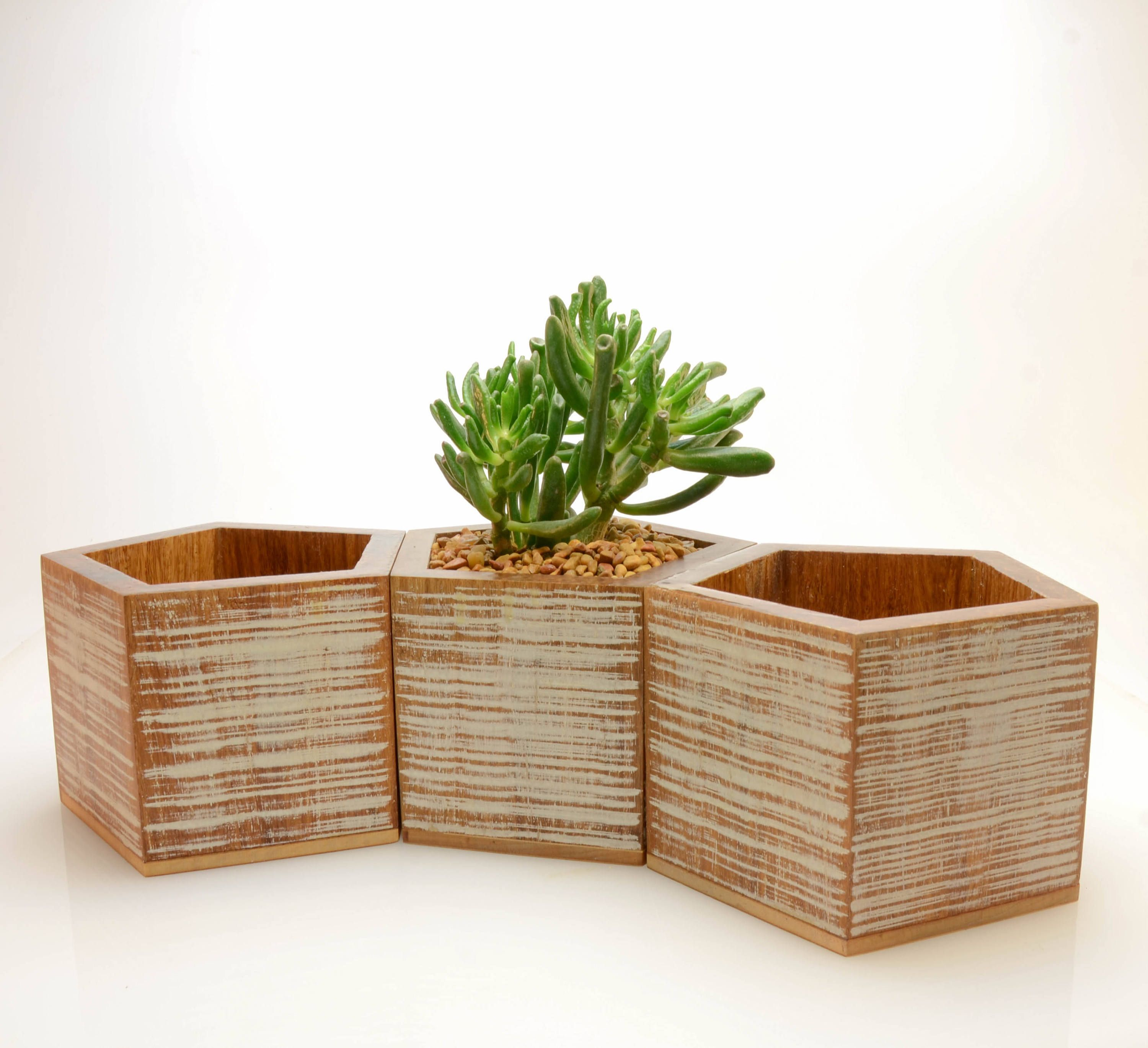 white planter preserved interiors oval product ft black trees tree replica in plants bamboo
