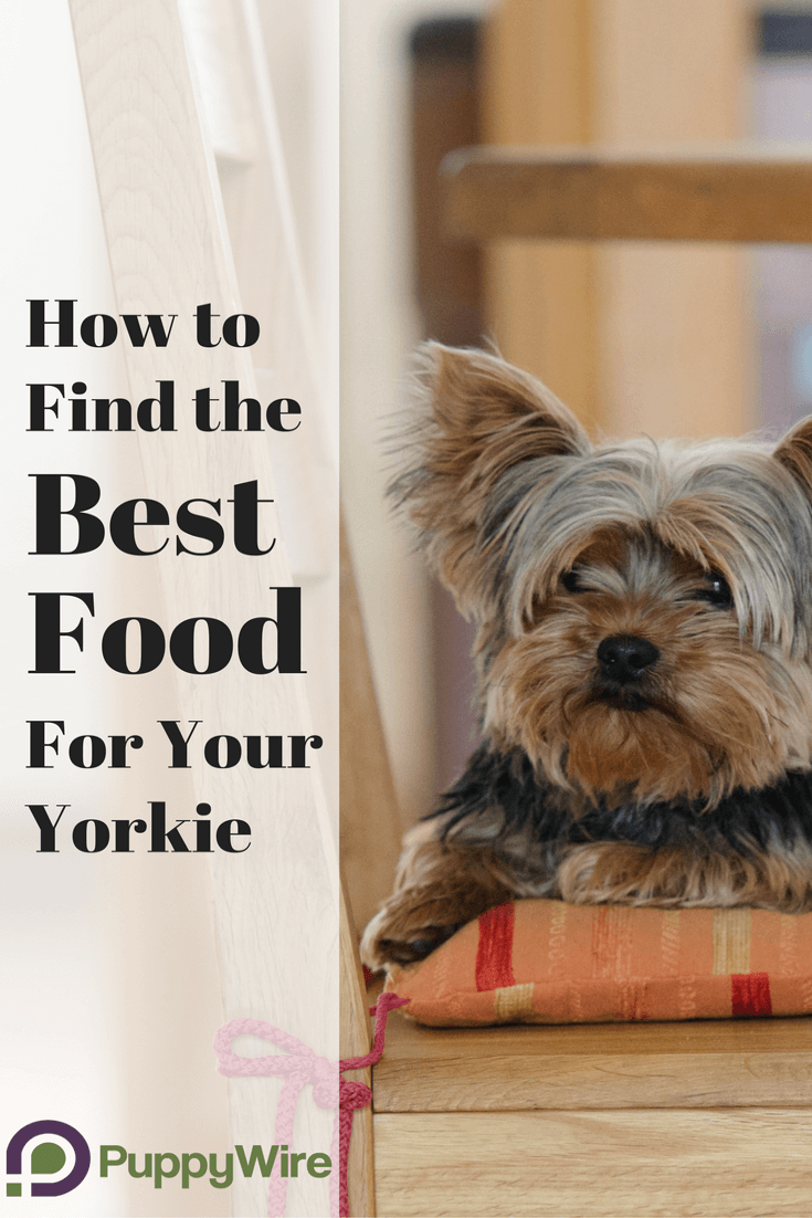 Best Dog Food For Yorkies 5 High Quality Food Choices Pinterest