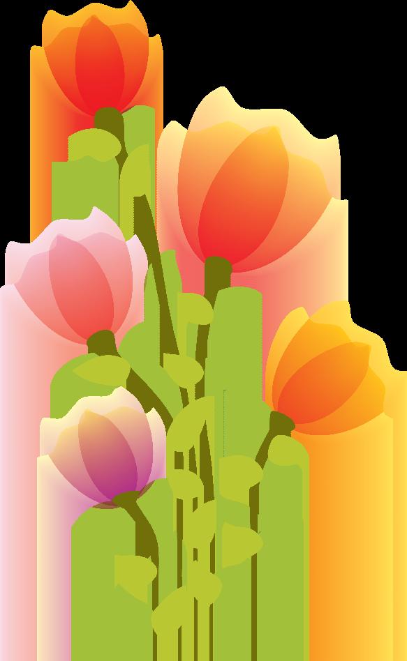 ‿✿⁀° Tulips °‿✿⁀