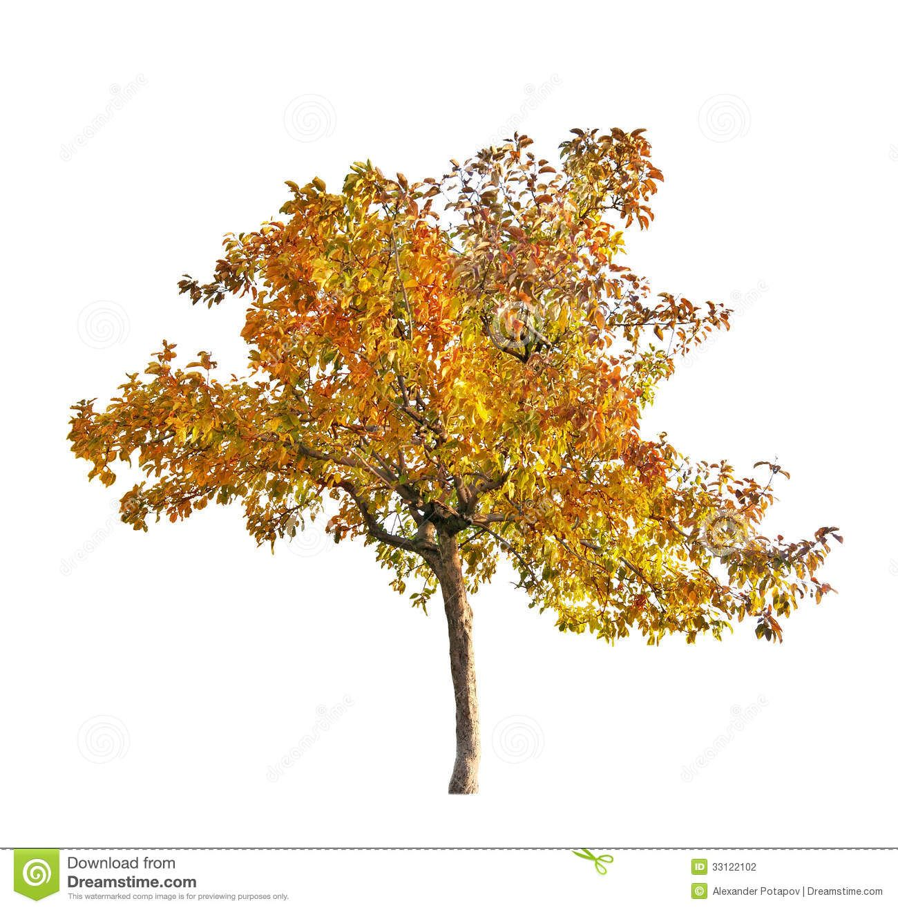 Photo About Fall Apple Tree Isolated On White Background Image Of