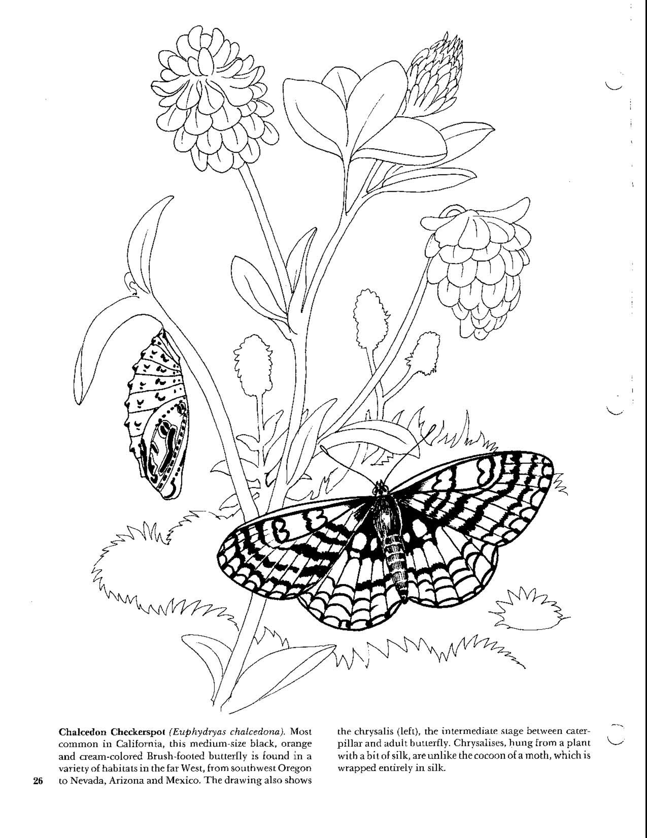 Butterflies Coloring Book Coloring Books Coloring Pages For Kids Coloring Pages