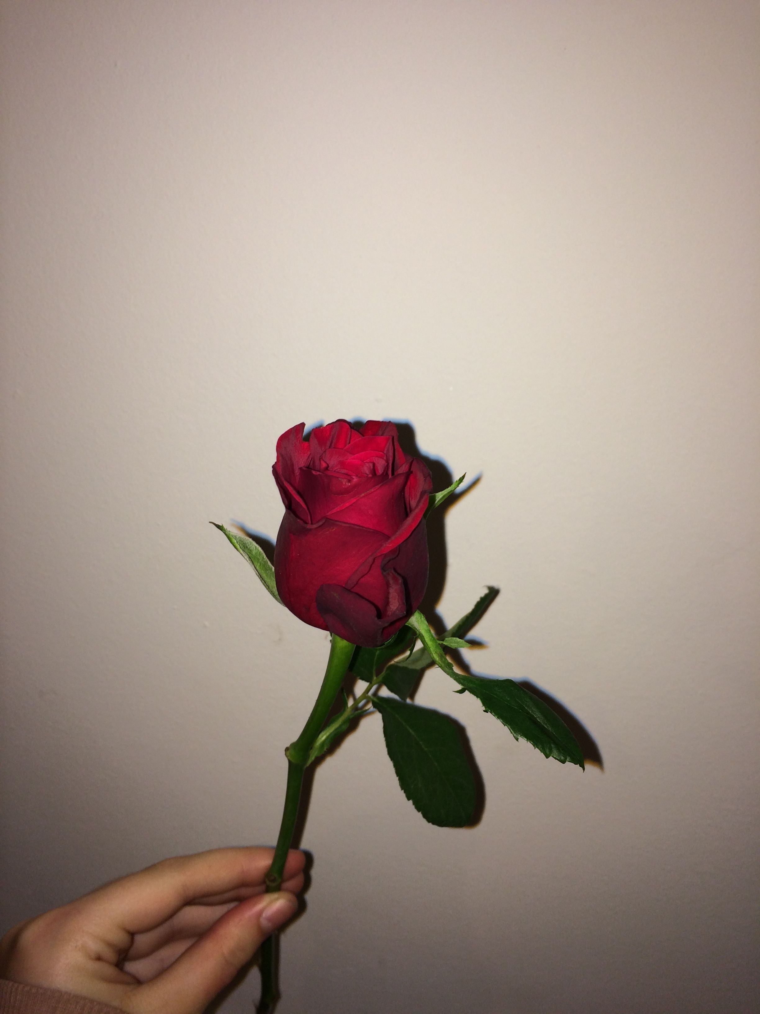 Pin By P On Aesthetic Pinterest Red Roses Rose Tumblr And Rose